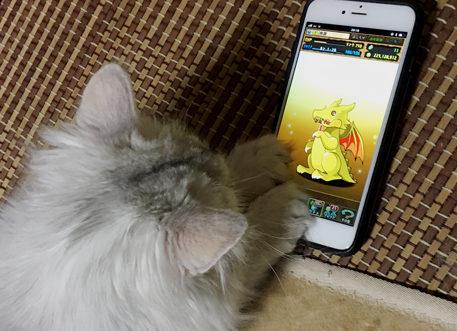 【パズドラ部】第697回:ゴッドフェス、困ったときは、猫引きだ!