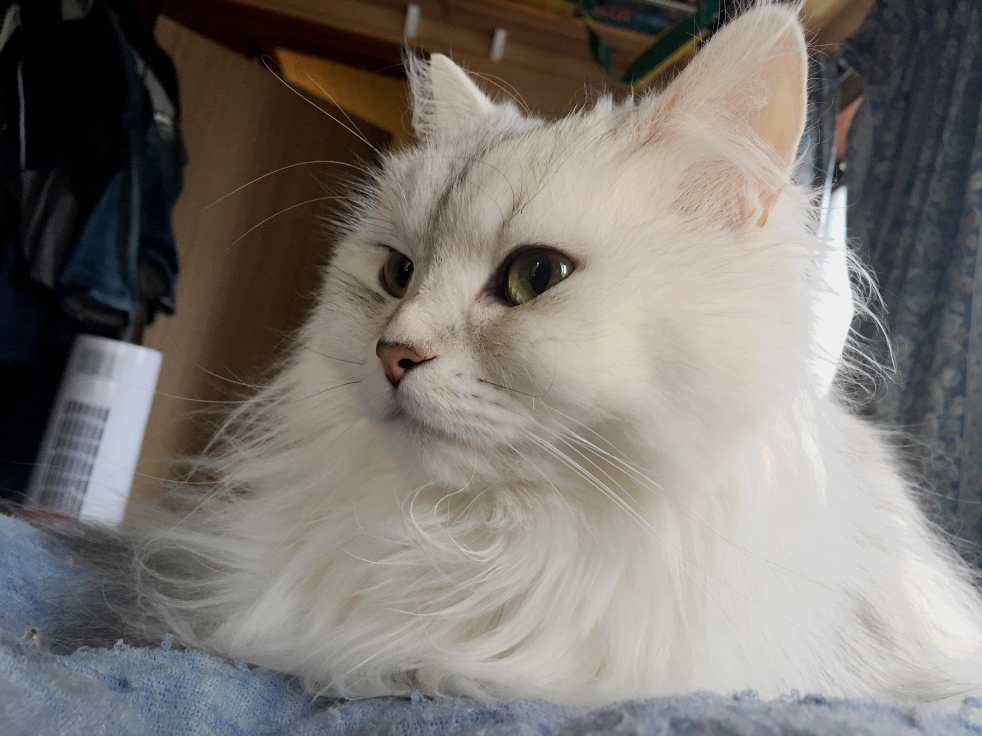 【パズドラ部】第939回:猫引き、リーリアを引き……寄せる?